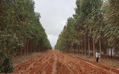 Kainuun Opisto on ostanut joulukortteihin varatuilla rahoilla viisi hehtaaria metsää Etiopiaan